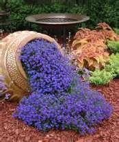 Garden / Blue annual lobelia is so easy to grow. It likes to be watered everyday. Its easy to grow from seed but faster to just go ahead and buy a flat of bedding plants.It goes all summer !