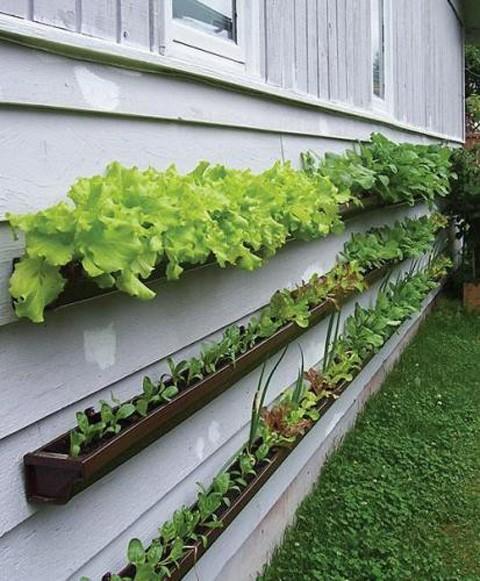 Garden / Gutter Gardening