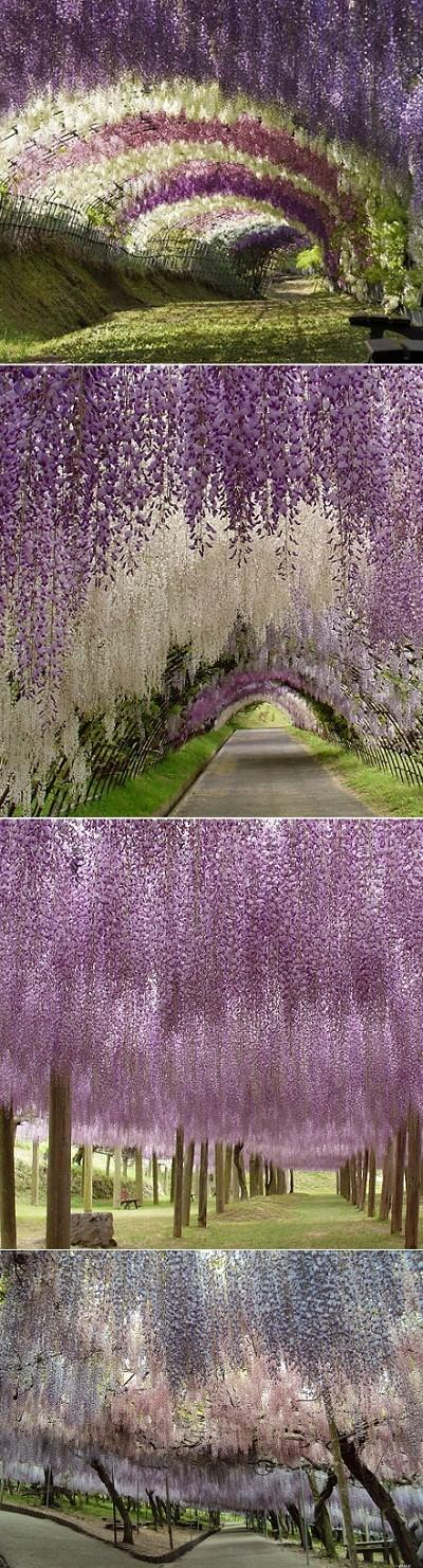 Garden / Kawachi Fuji Garden. This is a real garden, not a painting.