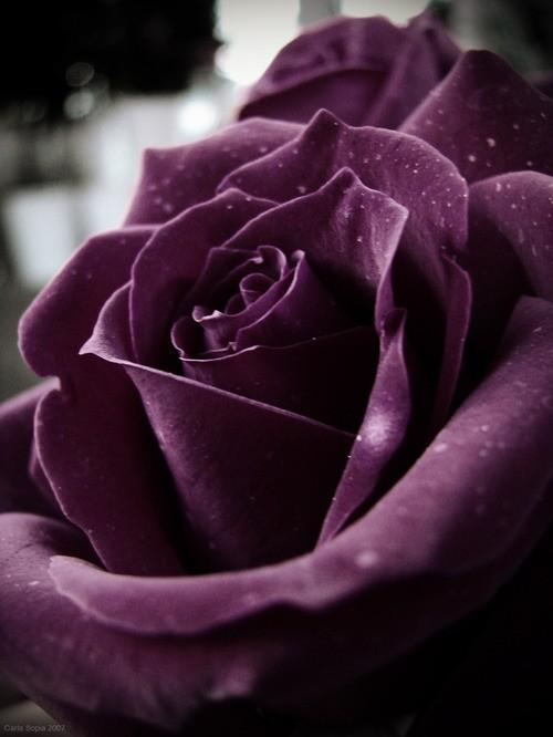 Garden / Luna and Chloe Weddings: ~ two: pretty plum details ~