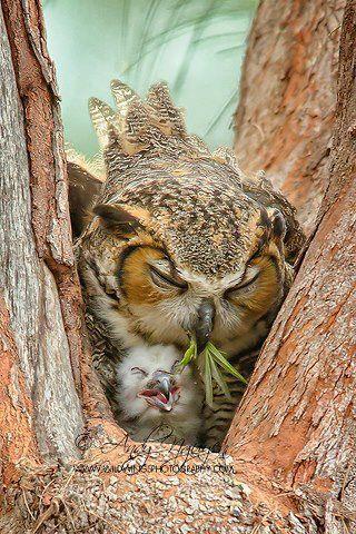 i love / Parenting