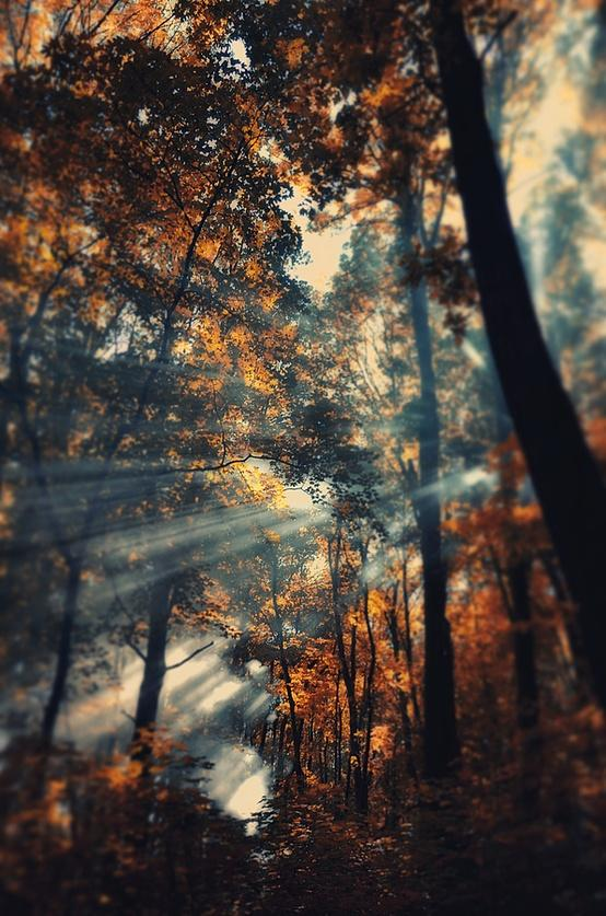 Imagery of a Dream / Autumn rays