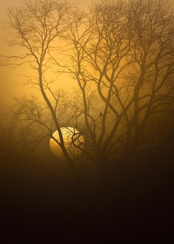 Imagery of a Dream / Watcher in the Fog