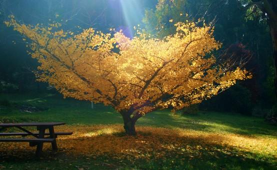 Moments of Zen / Leaves...