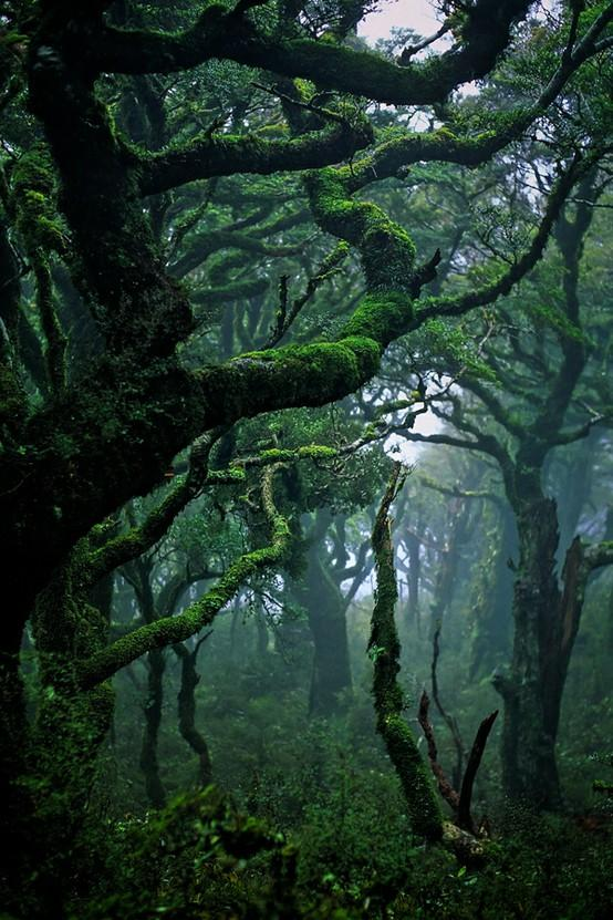 nature / Subtropical rainforest in Waikaremoana, New Zealand