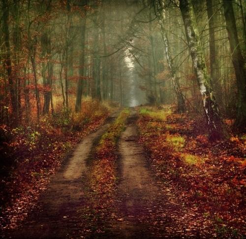 ? ??????? ? / November Forest [~Justine1985]