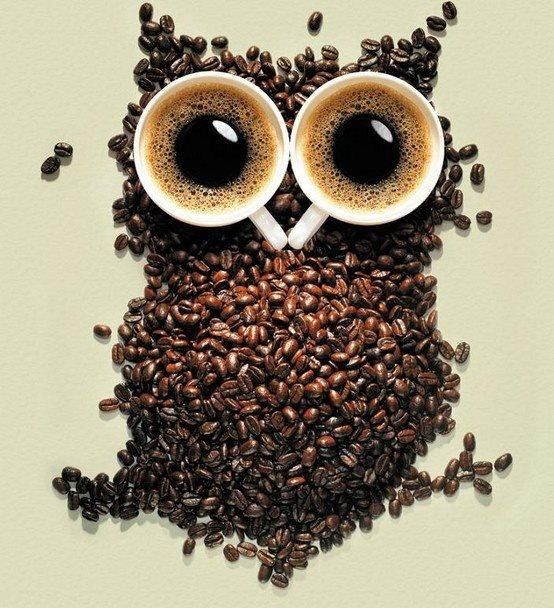 Owl / :) creative owl