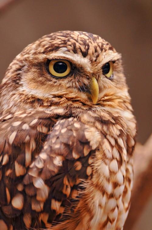 owls. / look.