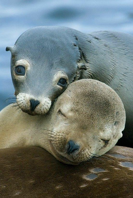 squeal / seals.