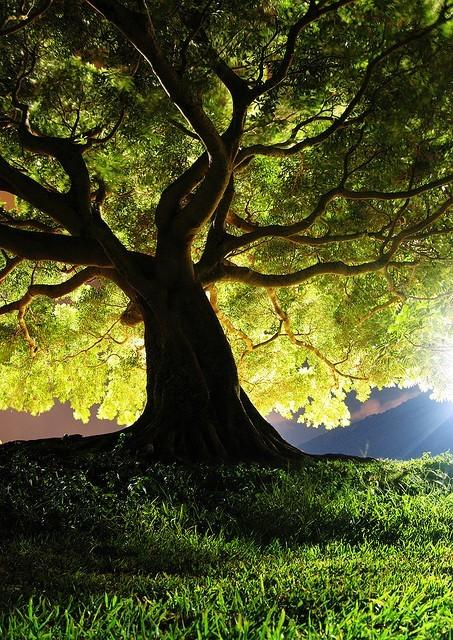 Trees / Beautiful picture..